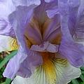 Iris Heart by Michiale Schneider