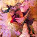 Iris IIi by Barbara Berney