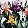 Iris Integration by Leah Wiedemer