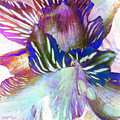 Iris Iv by Barbara Berney