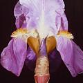 Iris by Judith Hoof van