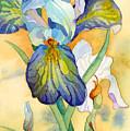 Iris by Casey Shannon
