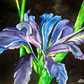 Iris by Lil Taylor