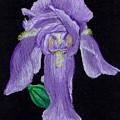 Iris by Mendy Pedersen