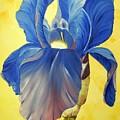 Iris by Murielle Hebert