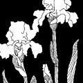 Iris Notan by Robert Bissett