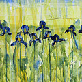 Iris On Parade by Diane Dean