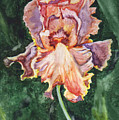 Iris On Yupo by Marsha Elliott