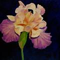 Iris by Peggy Guichu