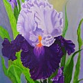 Iris by Peggy Holcroft