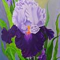 Iris by Peggy Holcroft