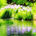 Iris' Reflection by Karin Everhart