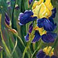 Iris by Renate Nadi Wesley