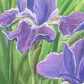 Iris by Sarah Grangier