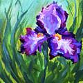 Iris Solo by Melissa G Thompson