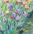 Iris Spring by Cheryl LaBahn Simeone