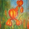 Iris by Stella Velka