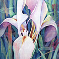 Iris by Susanne Clark