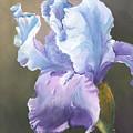Iris Tears by Sherry Shipley