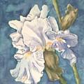 Iris Twenty One by Diane Ziemski