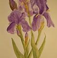 Iris by Vicki  Housel