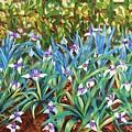 Irises by Caroline Street