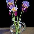 Irises In A Glass Pitcher by Rebecca Giles