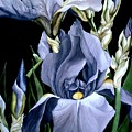 Irises In Blue by Alfred Ng
