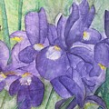 Irises by LInda Stephenson