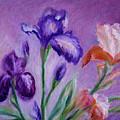 Irises by Natalie Maro