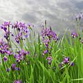 Irises On The Water by Lise Winne