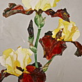 Irises-posthumously Presented Paintings Of Sachi Spohn  by Cliff Spohn