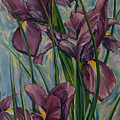 Irises by Rick Nederlof