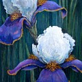 Irises by Tanja Ware