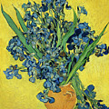 Irises Van Gogh 1890 by Vincent Van Gogh