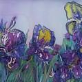 Irises2 by Natallia Mazurkevich