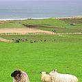 Irish Coast by Charles Harden