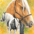 Irish Cob by Barbara Keith