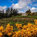 Irish Cottage In Spring by James Truett