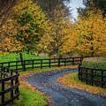 Irish Country Drive In Autumn by James Truett
