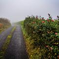 Irish County Road In Autumn by James Truett
