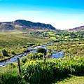 Irish Fields Of Green by Charrie Shockey