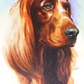 Irish Setter by Barbara Keith