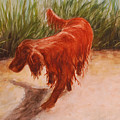 Irish Setter In The Grass by Alisa Potter