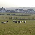 Irish Sheep Farm I by Henri Irizarri