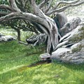 Irish Tree Ring Of Kerry by Joan Swanson