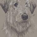 Irish Wolfhound by Barbara Keith