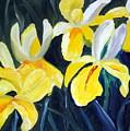 Irisis by Phil Burton