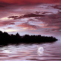 Sunset Swim by Jessica Jenney