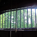 Iron Bars And Sunlight by Patricia Taylor